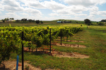 Douglas County, KS winery