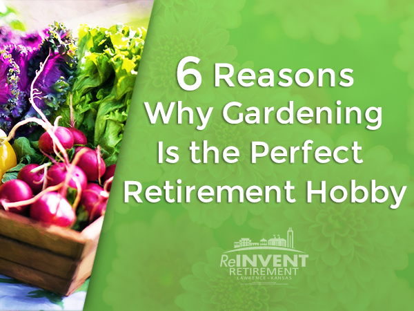 6 Reasons Why Gardening Is the Perfect Retirement Hobby